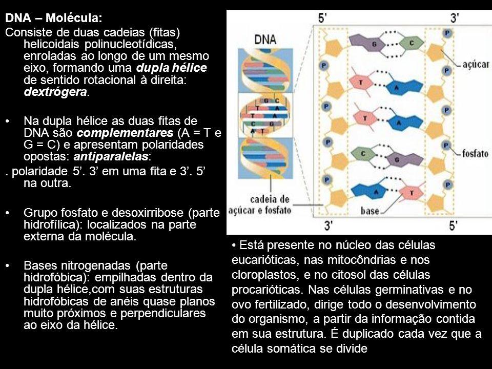 DNA - Regra de Chargaff: Erwin Chargaff (1950): técnica para medir a quantidade de cada tipo de base no DNA de diferentes espécies.