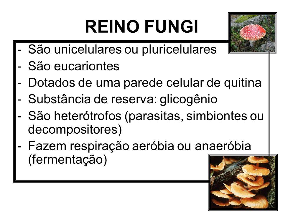 REINO FUNGI -São unicelulares ou pluricelulares -São eucariontes -Dotados de uma parede celular de quitina -Substância de reserva: glicogênio -São het