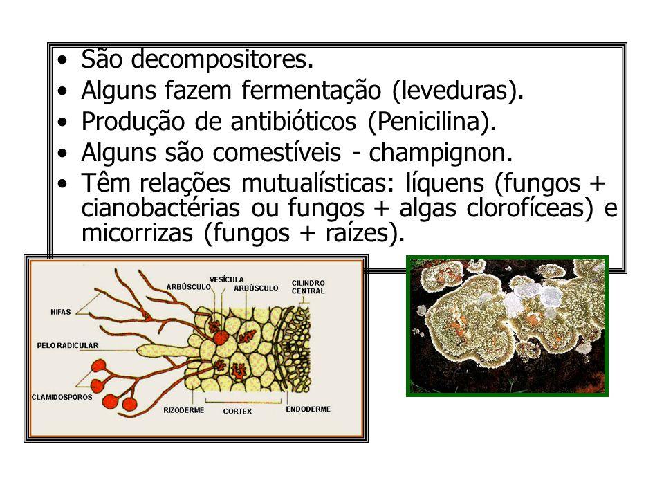 São decompositores. Alguns fazem fermentação (leveduras). Produção de antibióticos (Penicilina). Alguns são comestíveis - champignon. Têm relações mut
