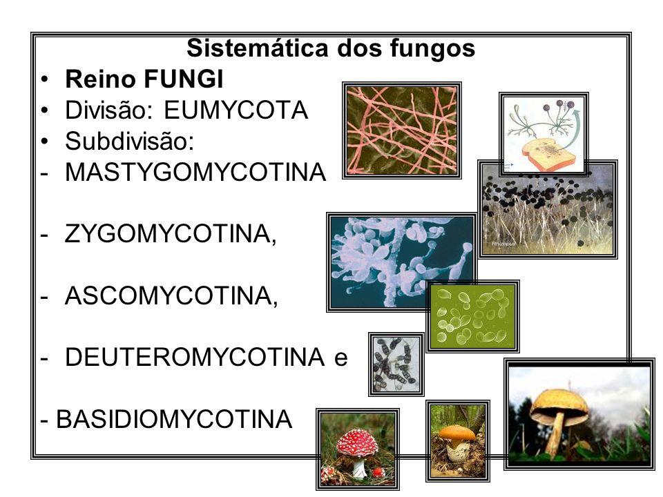 Sistemática dos fungos Reino FUNGI Divisão: EUMYCOTA Subdivisão: -MASTYGOMYCOTINA -ZYGOMYCOTINA, -ASCOMYCOTINA, -DEUTEROMYCOTINA e - BASIDIOMYCOTINA