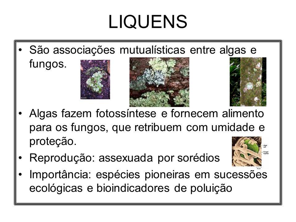 LIQUENS São associações mutualísticas entre algas e fungos. Algas fazem fotossíntese e fornecem alimento para os fungos, que retribuem com umidade e p