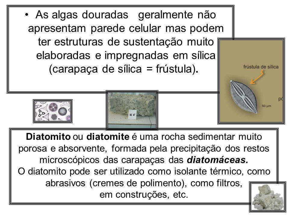 As algas douradas geralmente não apresentam parede celular mas podem ter estruturas de sustentação muito elaboradas e impregnadas em sílica (carapaça
