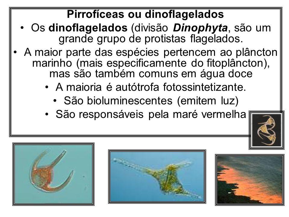 Pirrofíceas ou dinoflagelados Os dinoflagelados (divisão Dinophyta, são um grande grupo de protistas flagelados. A maior parte das espécies pertencem