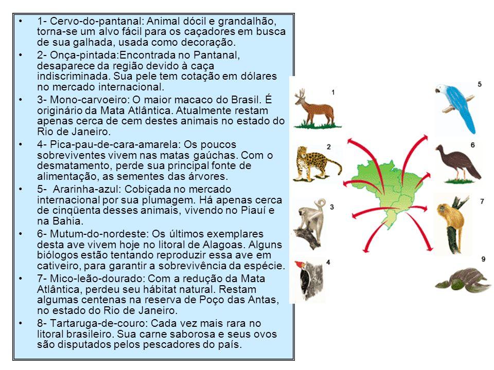 1- Cervo-do-pantanal: Animal dócil e grandalhão, torna-se um alvo fácil para os caçadores em busca de sua galhada, usada como decoração. 2- Onça-pinta
