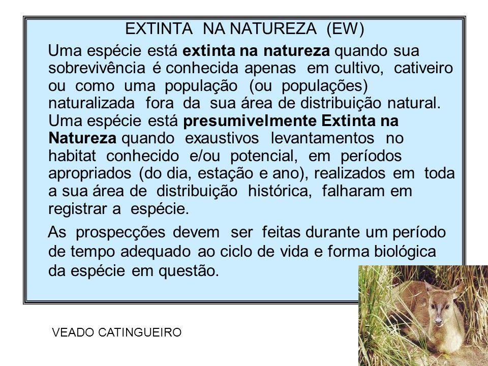 EXTINTA NA NATUREZA (EW) Uma espécie está extinta na natureza quando sua sobrevivência é conhecida apenas em cultivo, cativeiro ou como uma população