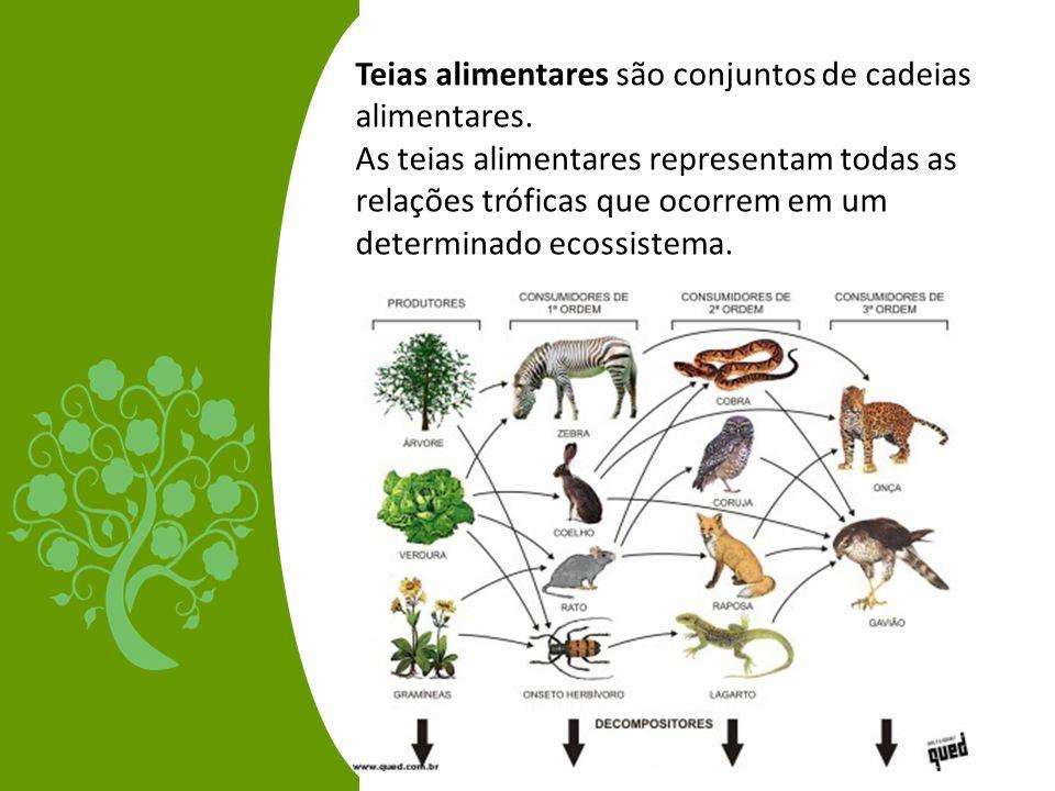 Teias alimentares são conjuntos de cadeias alimentares. As teias alimentares representam todas as relações tróficas que ocorrem em um determinado ecos