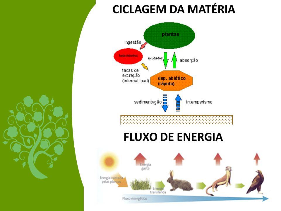 CICLAGEM DA MATÉRIA FLUXO DE ENERGIA