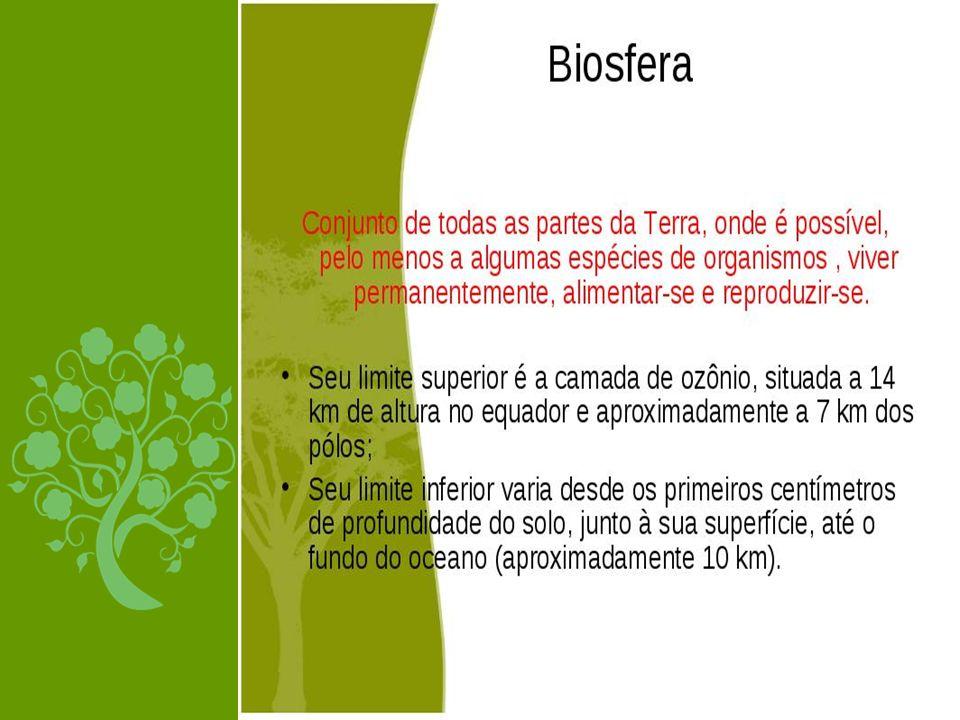 COMPONENTES BIÓTICOS E ABIÓTICOS DO ECOSSISTEMA COMPONENTES BIÓTICOS são os seres vivos: animais (inclusive o homem),vegetais, fungos, protozoários e bactérias.
