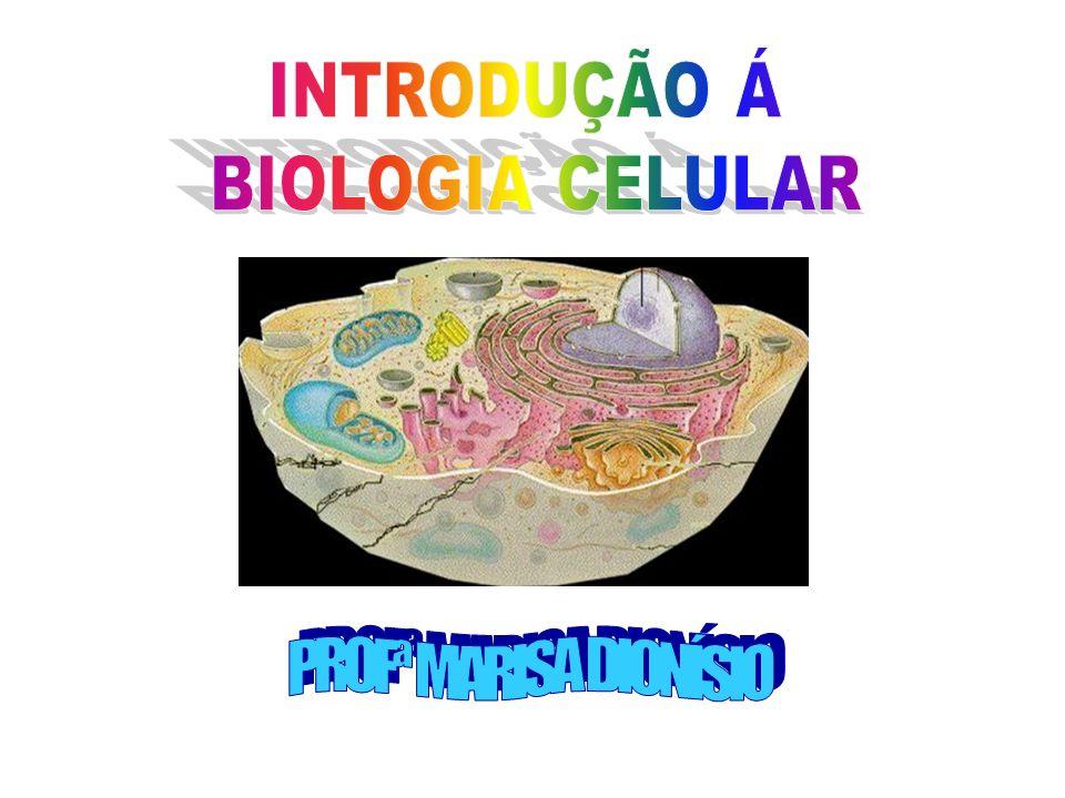 FORMA E TAMANHO DAS CÉLULAS A forma da célula é variada e depende de sua função.