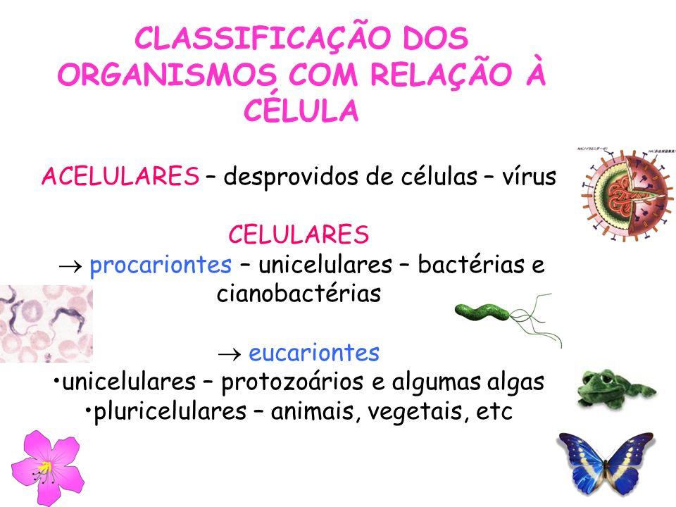 CLASSIFICAÇÃO DOS ORGANISMOS COM RELAÇÃO À CÉLULA ACELULARES – desprovidos de células – vírus CELULARES procariontes – unicelulares – bactérias e cian