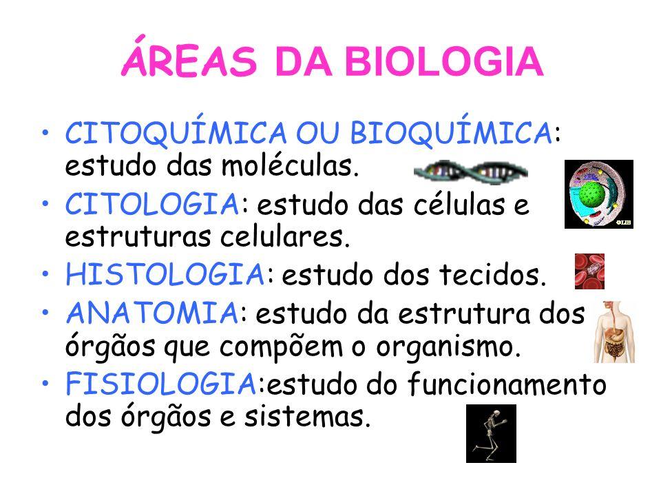 ÁREAS DA BIOLOGIA CITOQUÍMICA OU BIOQUÍMICA: estudo das moléculas. CITOLOGIA: estudo das células e estruturas celulares. HISTOLOGIA: estudo dos tecido