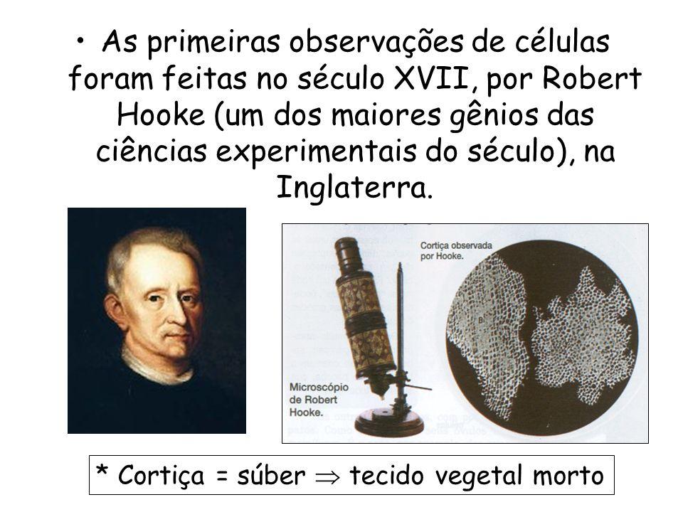 As primeiras observações de células foram feitas no século XVII, por Robert Hooke (um dos maiores gênios das ciências experimentais do século), na Ing
