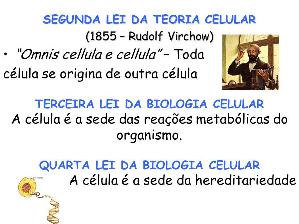 SEGUNDA LEI DA TEORIA CELULAR (1855 – Rudolf Virchow) Omnis cellula e cellula – Toda célula se origina de outra célula TERCEIRA LEI DA BIOLOGIA CELULA