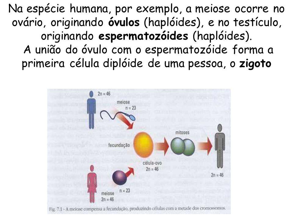 Na espécie humana, por exemplo, a meiose ocorre no ovário, originando óvulos (haplóides), e no testículo, originando espermatozóides (haplóides). A un