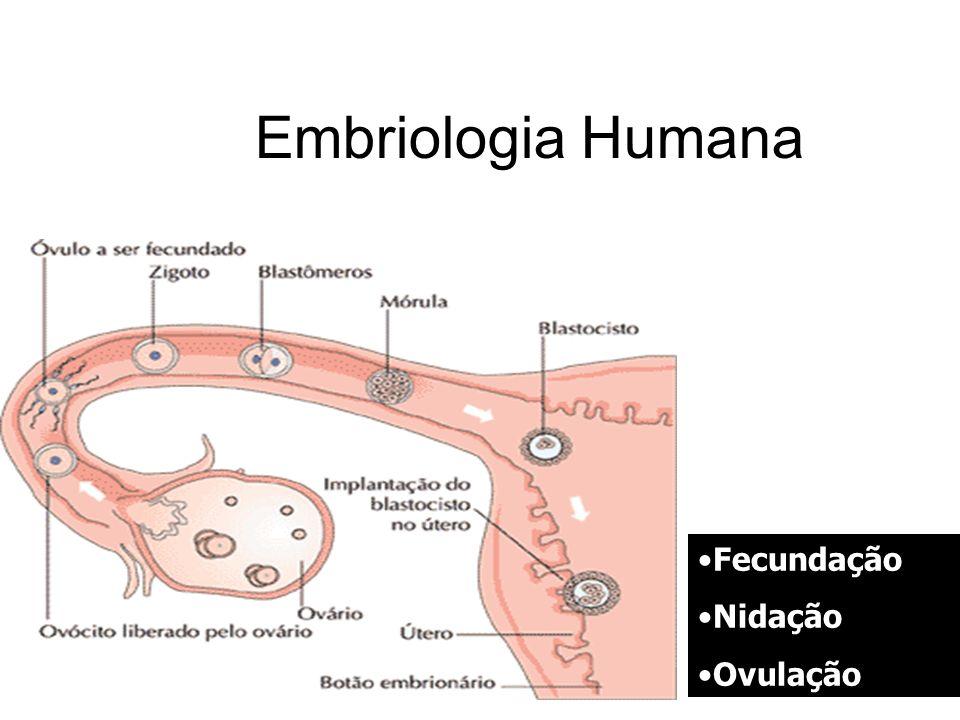 Embriologia Humana Fecundação Nidação Ovulação