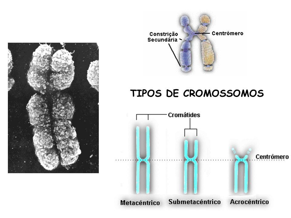 TIPOS DE CROMOSSOMOS