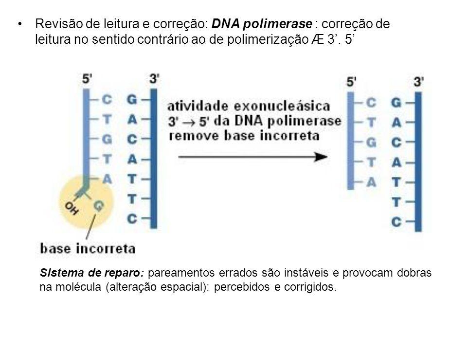 Revisão de leitura e correção: DNA polimerase : correção de leitura no sentido contrário ao de polimerização Æ 3. 5 Sistema de reparo: pareamentos err