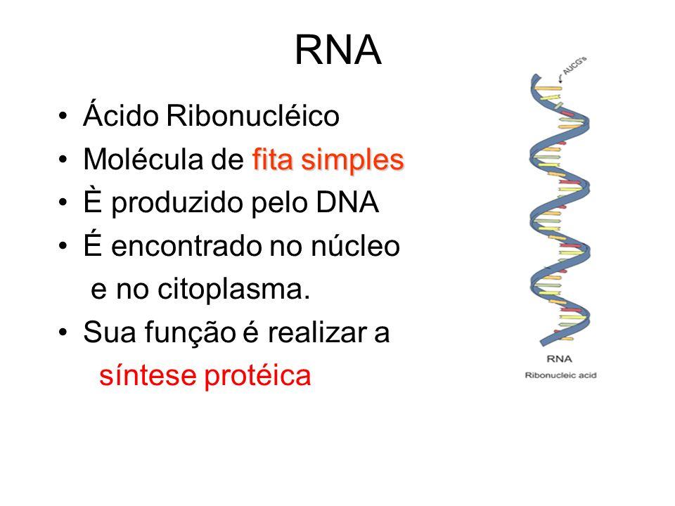RNA Ácido Ribonucléico fita simplesMolécula de fita simples È produzido pelo DNA É encontrado no núcleo e no citoplasma. Sua função é realizar a sínte