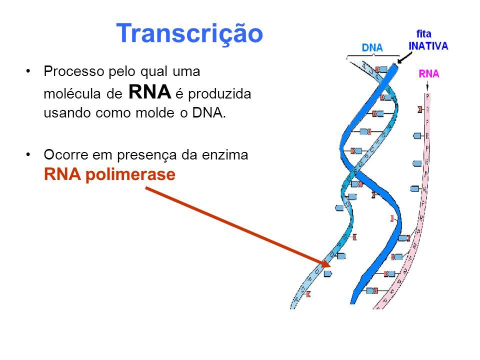 Transcrição Processo pelo qual uma molécula de RNA é produzida usando como molde o DNA. Ocorre em presença da enzima RNA polimerase
