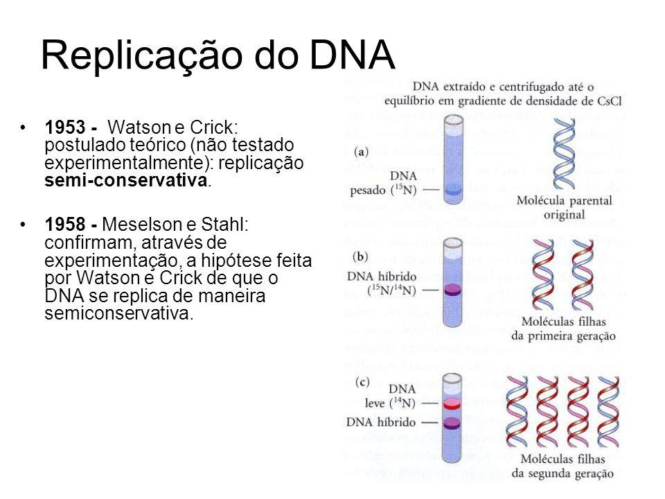 Replicação do DNA 1953 - Watson e Crick: postulado teórico (não testado experimentalmente): replicação semi-conservativa. 1958 - Meselson e Stahl: con