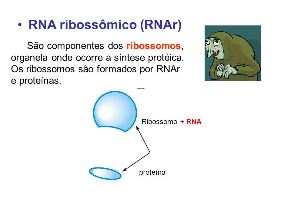 RNA ribossômico (RNAr) ribossomos São componentes dos ribossomos, organela onde ocorre a síntese protéica. Os ribossomos são formados por RNAr e prote