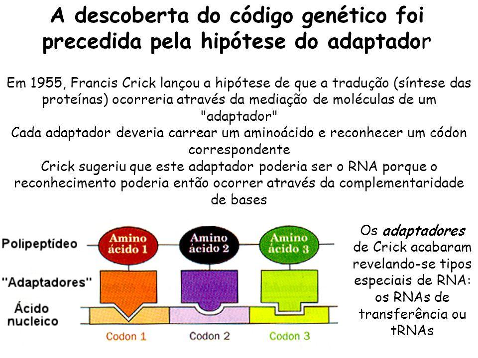 A descoberta do código genético foi precedida pela hipótese do adaptador Os adaptadores de Crick acabaram revelando-se tipos especiais de RNA: os RNAs