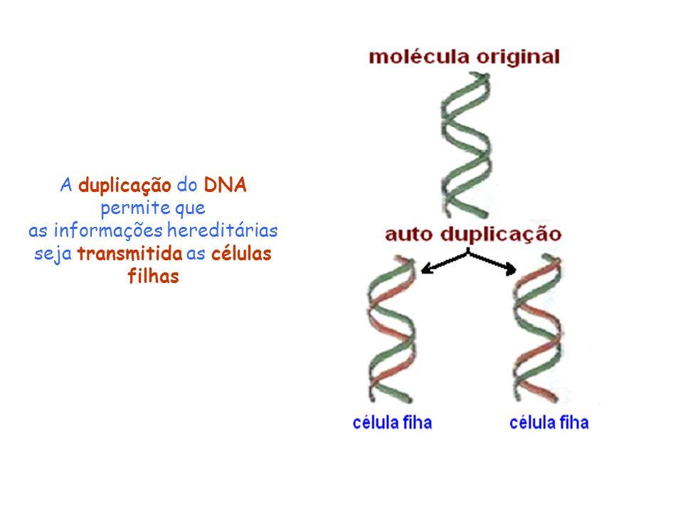 A duplicação do DNA permite que as informações hereditárias seja transmitida as células filhas