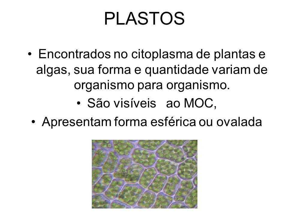 PLASTOS Encontrados no citoplasma de plantas e algas, sua forma e quantidade variam de organismo para organismo. São visíveis ao MOC, Apresentam forma