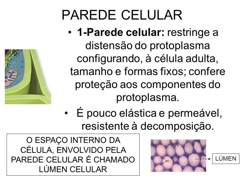 PAREDE CELULAR 1-Parede celular: restringe a distensão do protoplasma configurando, à célula adulta, tamanho e formas fixos; confere proteção aos comp