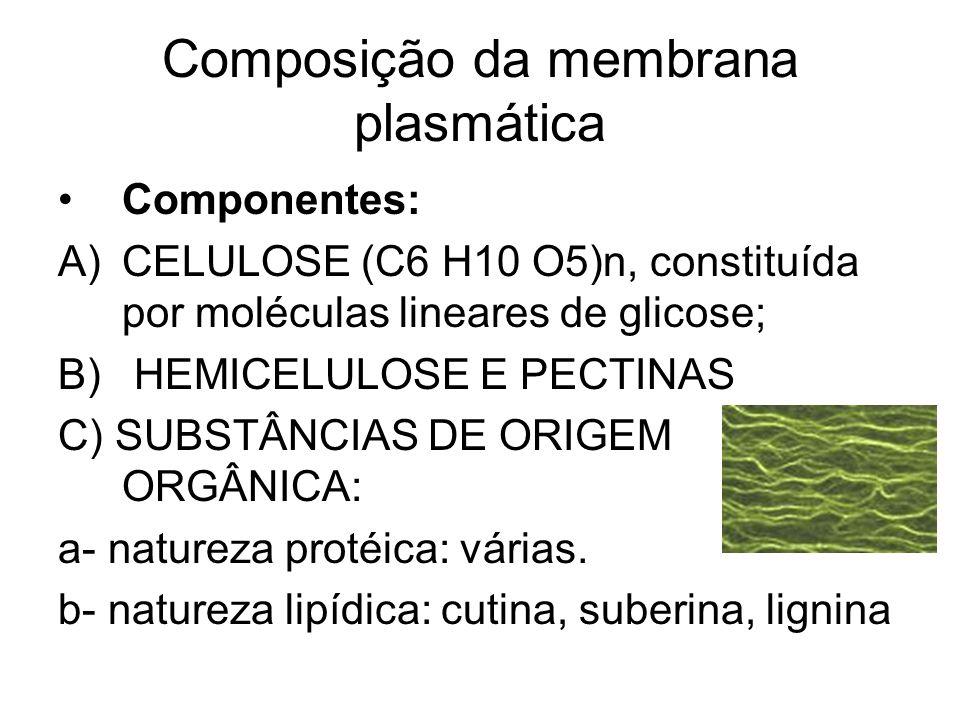 Composição da membrana plasmática Componentes: A)CELULOSE (C6 H10 O5)n, constituída por moléculas lineares de glicose; B) HEMICELULOSE E PECTINAS C) S