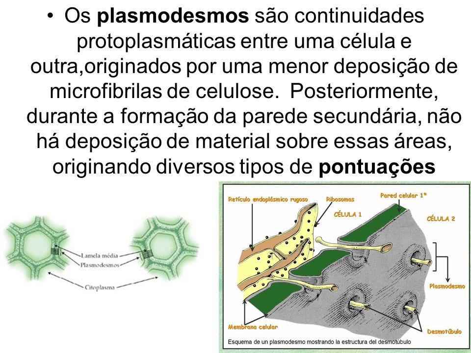 Os plasmodesmos são continuidades protoplasmáticas entre uma célula e outra,originados por uma menor deposição de microfibrilas de celulose. Posterior