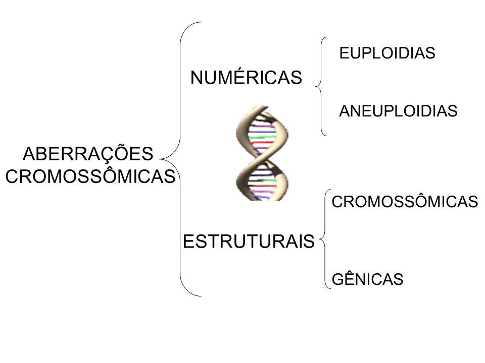 ABERRAÇÕES CROMOSSÔMICAS NUMÉRICAS ESTRUTURAIS EUPLOIDIAS ANEUPLOIDIAS CROMOSSÔMICAS GÊNICAS