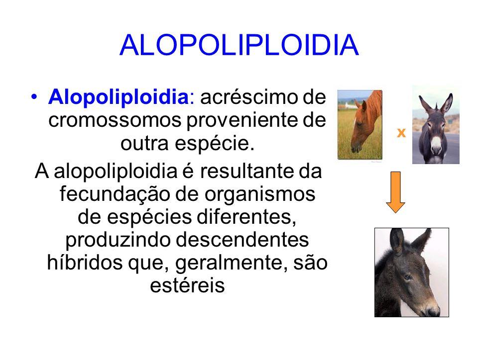 ALOPOLIPLOIDIA Alopoliploidia: acréscimo de cromossomos proveniente de outra espécie. A alopoliploidia é resultante da fecundação de organismos de esp