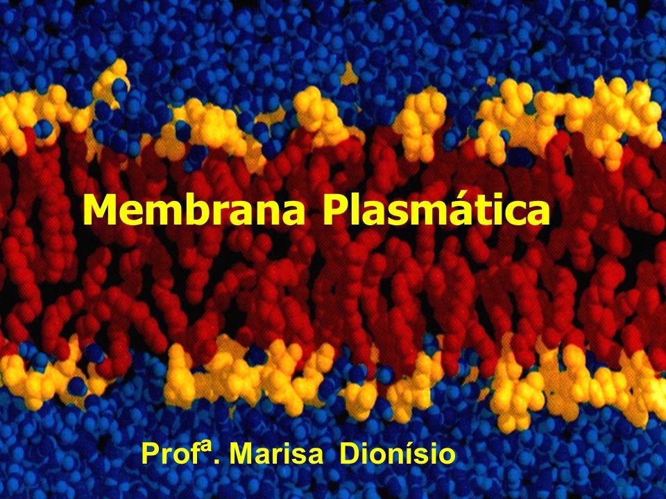 A membrana celular é a estrutura que delimita todas as células vivas, tanto as procarióticas como as eucarióticas.