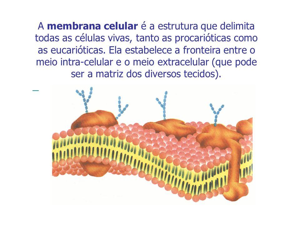 A membrana celular é a estrutura que delimita todas as células vivas, tanto as procarióticas como as eucarióticas. Ela estabelece a fronteira entre o