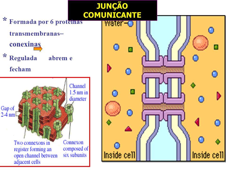JUNÇÃO COMUNICANTE * Formada por 6 proteínas transmembranas – conexinas * Regulada abrem e fecham