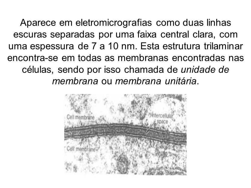 FUNÇÕES DA MEMBRANA PLASMÁTICA - dá individualidade a cada célula, definindo meios intra e extra celular.