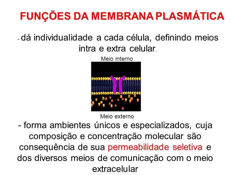 FUNÇÕES DA MEMBRANA PLASMÁTICA - dá individualidade a cada célula, definindo meios intra e extra celular. - forma ambientes únicos e especializados, c