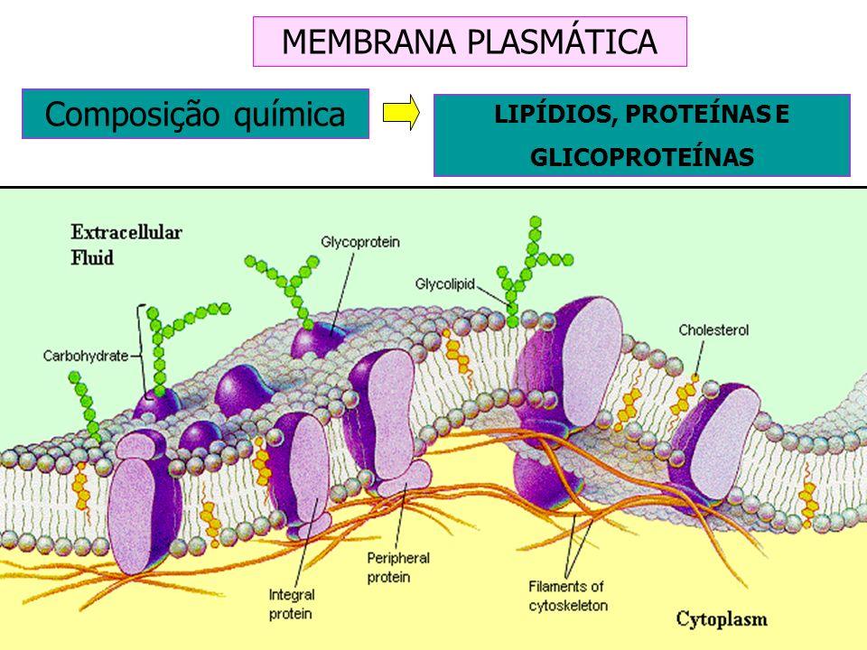 MEMBRANA PLASMÁTICA Composição química LIPÍDIOS, PROTEÍNAS E GLICOPROTEÍNAS