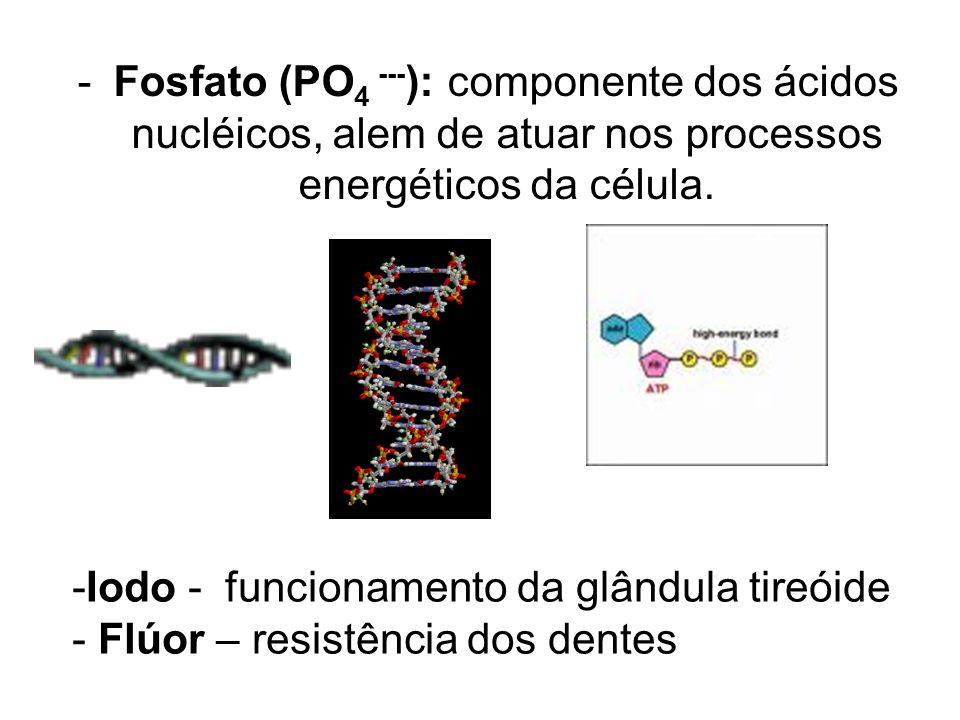-Fosfato (PO 4 --- ): componente dos ácidos nucléicos, alem de atuar nos processos energéticos da célula.