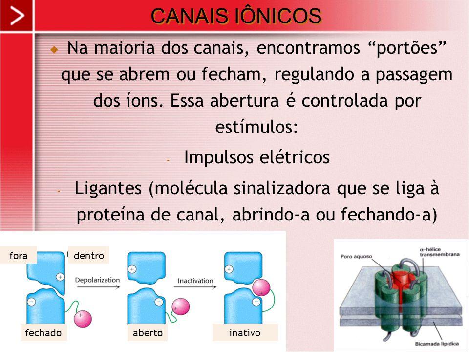 xx/xx 15 CANAIS IÔNICOS Na maioria dos canais, encontramos portões que se abrem ou fecham, regulando a passagem dos íons. Essa abertura é controlada p