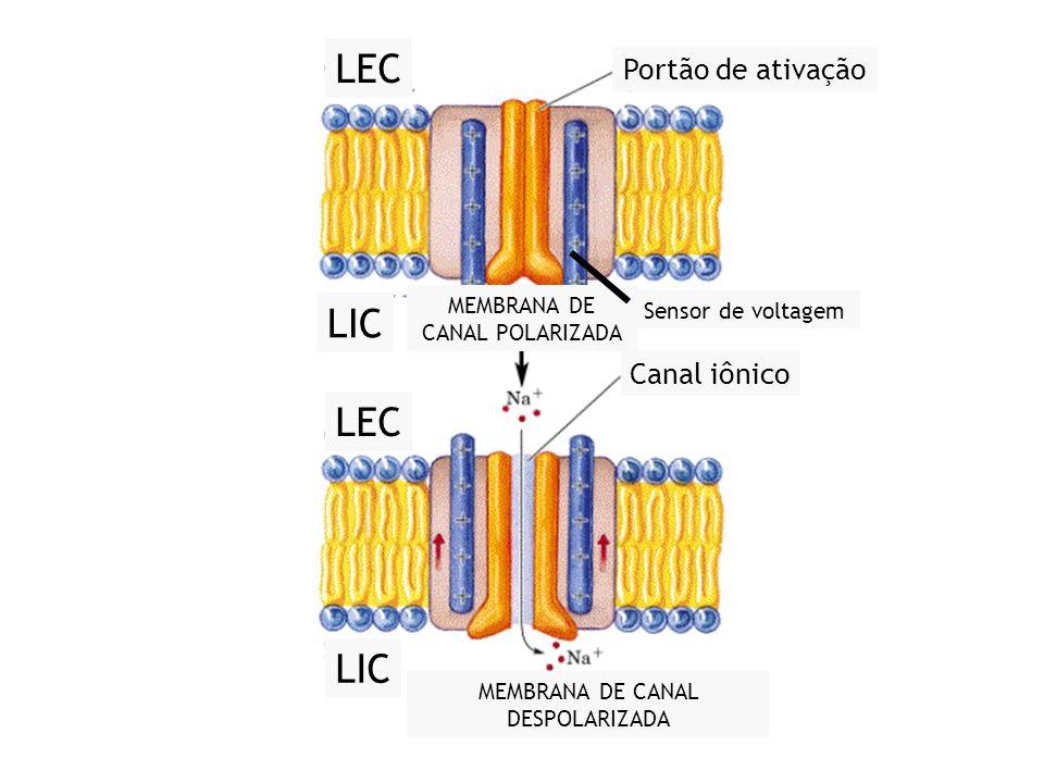xx/xx 16 LEC LIC LEC LIC MEMBRANA DE CANAL POLARIZADA Sensor de voltagem Portão de ativação Canal iônico MEMBRANA DE CANAL DESPOLARIZADA