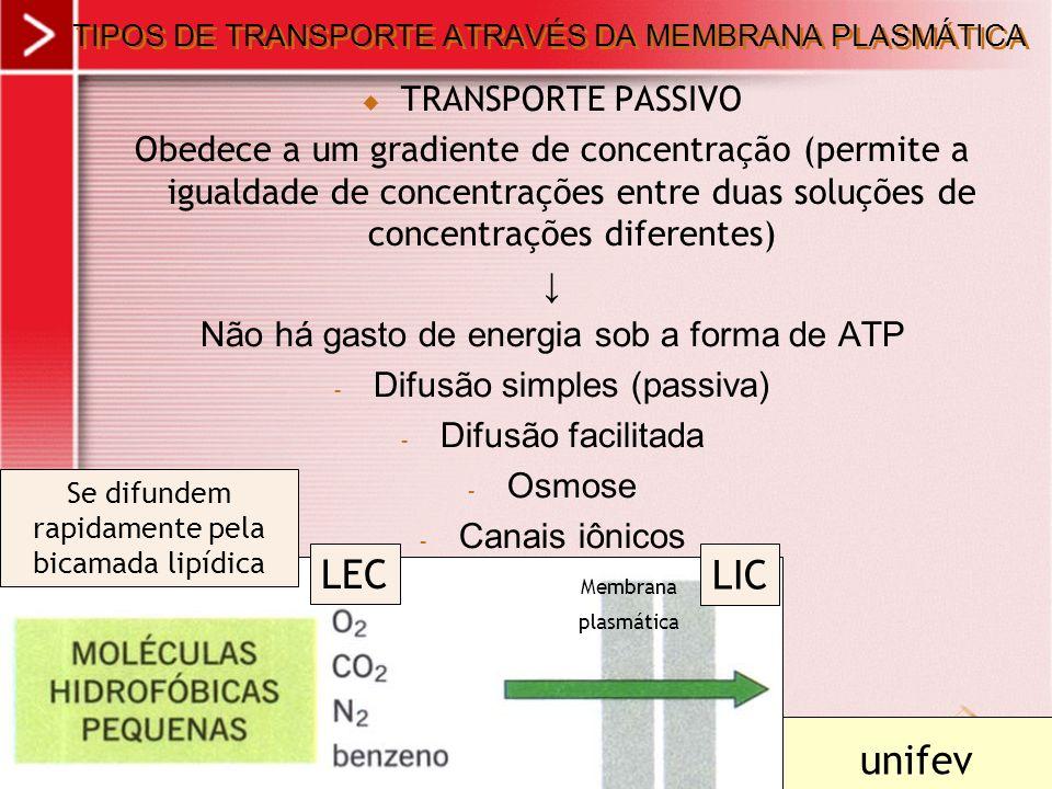 xx/xx 2 TIPOS DE TRANSPORTE ATRAVÉS DA MEMBRANA PLASMÁTICA TRANSPORTE PASSIVO Obedece a um gradiente de concentração (permite a igualdade de concentra