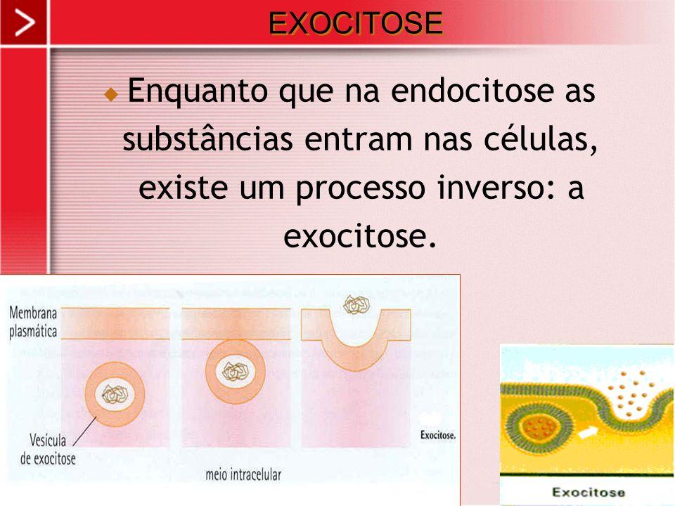 xx/xx 30 EXOCITOSE Enquanto que na endocitose as substâncias entram nas células, existe um processo inverso: a exocitose.