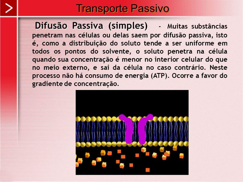 Transporte Passivo Difusão Passiva (simples) Difusão Passiva (simples) - Muitas substâncias penetram nas células ou delas saem por difusão passiva, is
