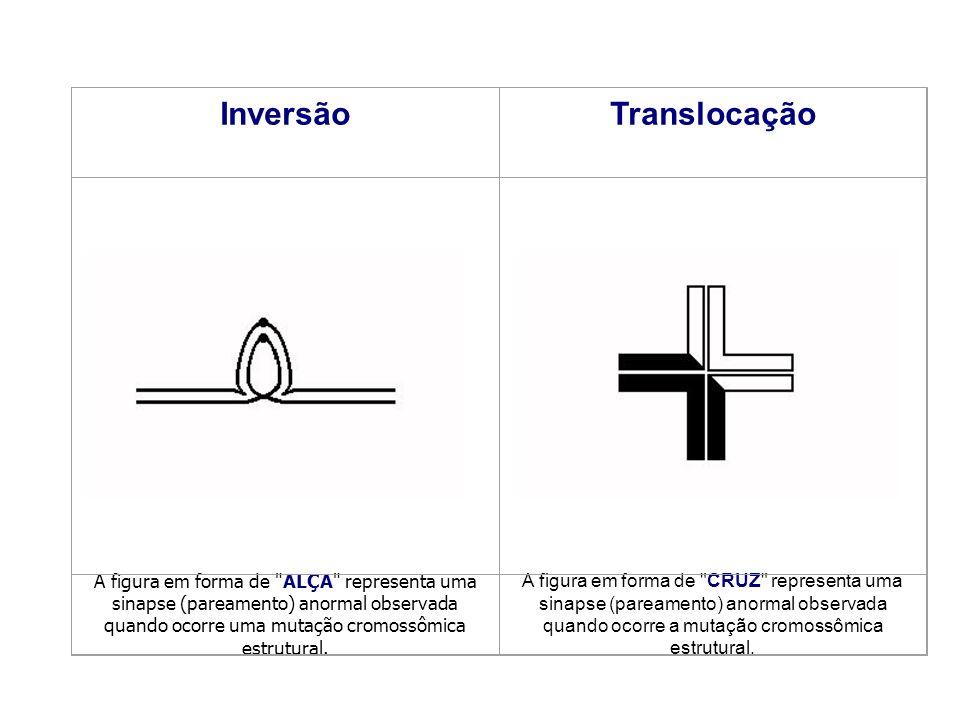 InversãoTranslocação A figura em forma de