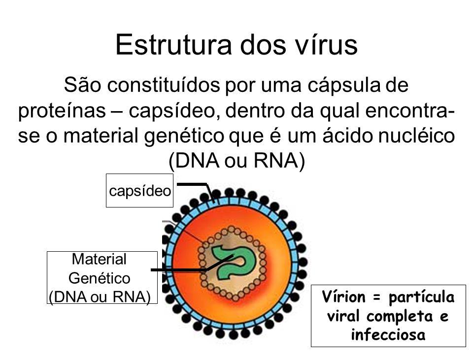 Estrutura dos vírus São constituídos por uma cápsula de proteínas – capsídeo, dentro da qual encontra- se o material genético que é um ácido nucléico