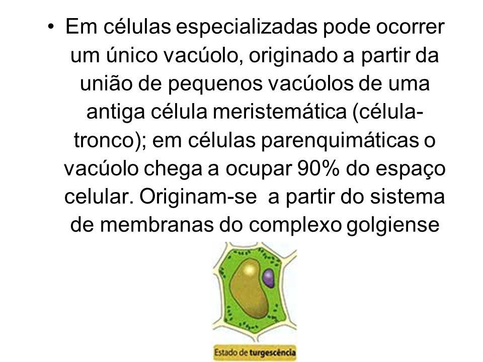 Em células especializadas pode ocorrer um único vacúolo, originado a partir da união de pequenos vacúolos de uma antiga célula meristemática (célula-
