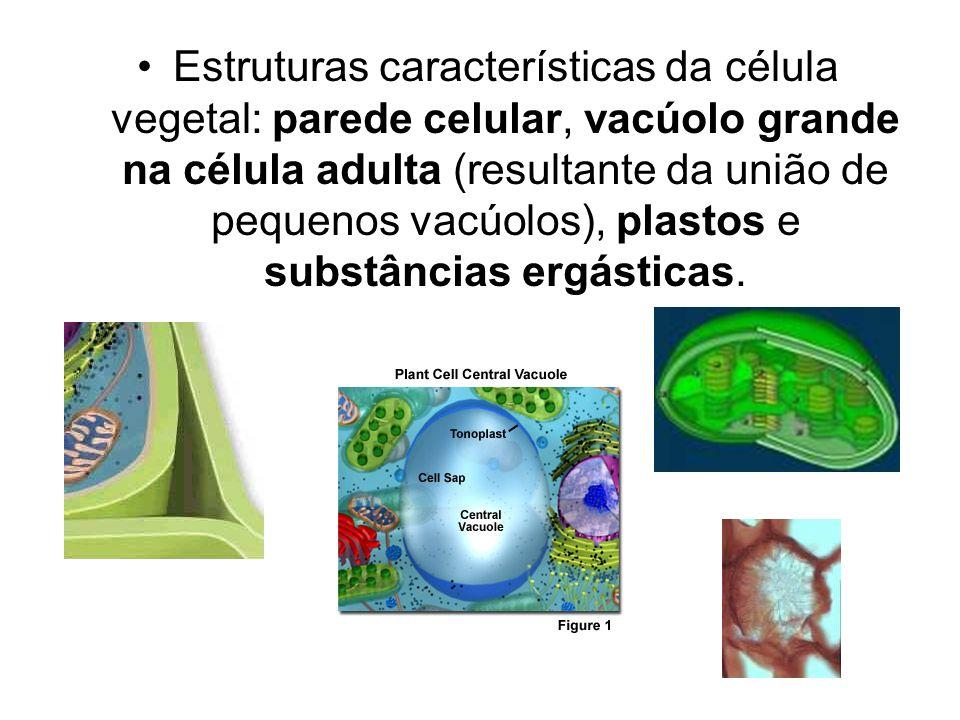 Estruturas características da célula vegetal: parede celular, vacúolo grande na célula adulta (resultante da união de pequenos vacúolos), plastos e su