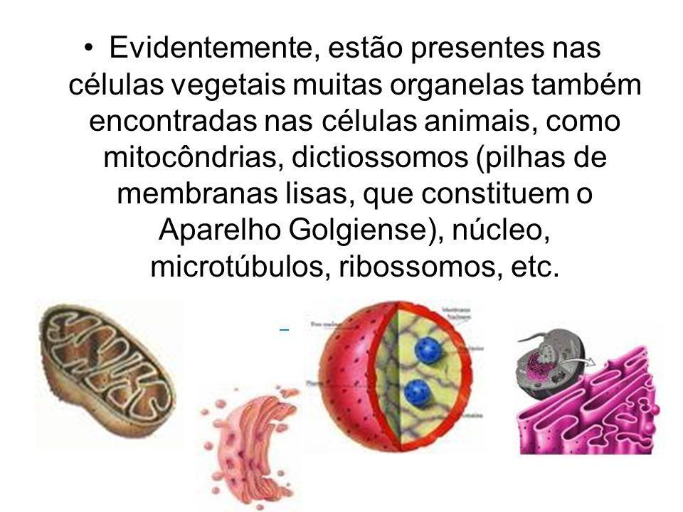 Evidentemente, estão presentes nas células vegetais muitas organelas também encontradas nas células animais, como mitocôndrias, dictiossomos (pilhas d